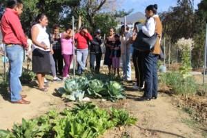 Beneficiará DIF Municipal a mil 700 familias  con los huertos comunitarios