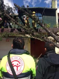 Atiende Protección Civil Municipal afectaciones en arbolado  e infraestructura urbana provocados por fuertes vientos